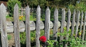 garden-fence-484708_640(2)