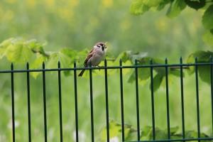 sparrow-188725_640(1)
